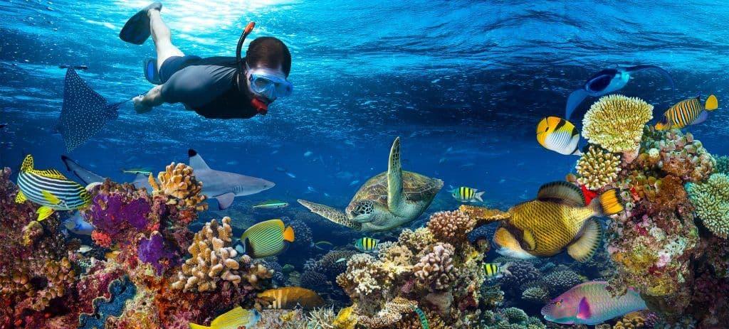 cozumel snorkel tour